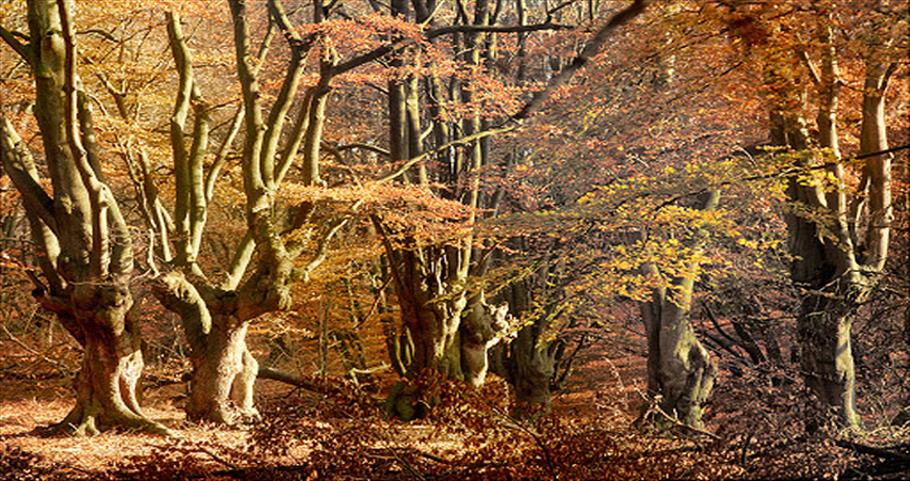 Photograph of trees in Epping Forest in the autumn.