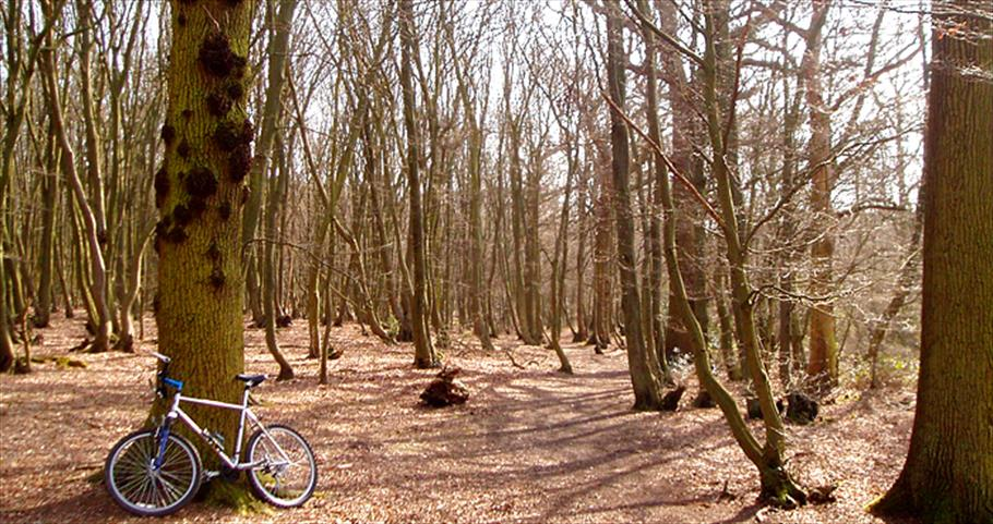 Mountain bike resting against a tree in Epping