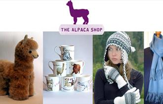 The Alpaca Shop at Butler's Farm and online.