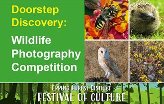 Epping Forest Wildlife Photography Competition