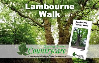 The mighty Squire's Oak can be seen on the Lambourne Walk.