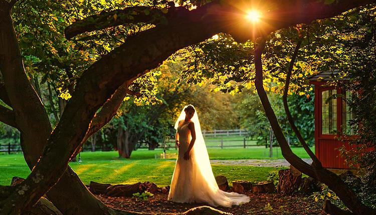 Evening in the grounds of wedding venue Mulberry House, Ongar