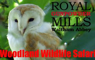 Woodland Wildlife Safari at the Royal Gunpowder Mills, Waltham Abbey.