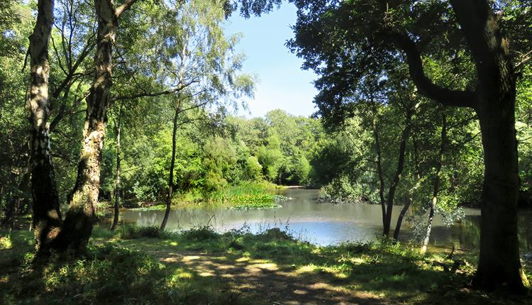 The pond in the Lower Forest, part of Epping Forest.
